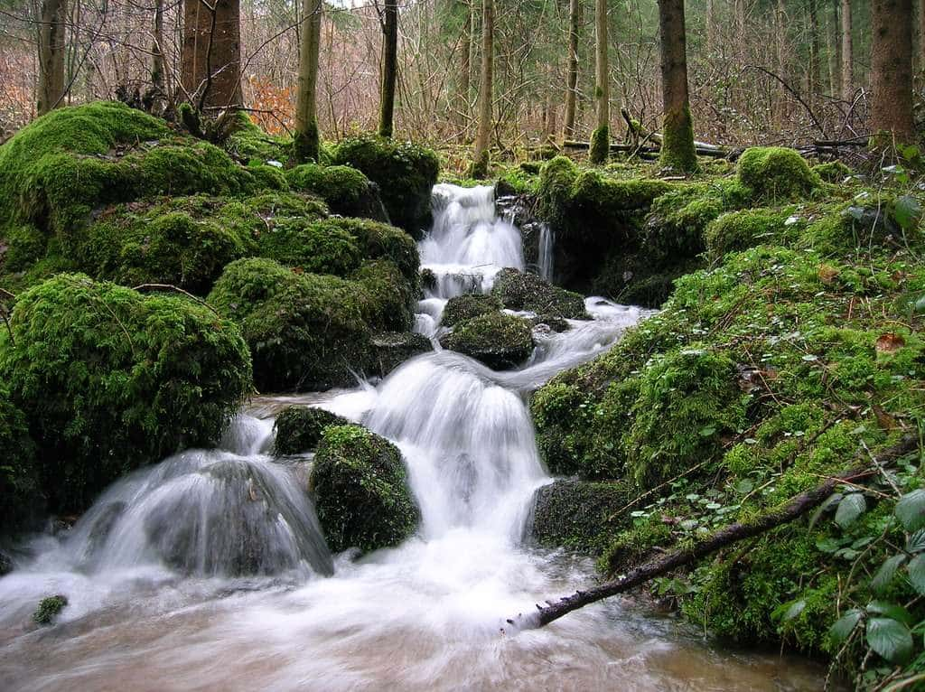Get Water In The Forest