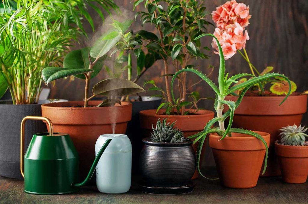 How To Use Humidifier For Plants